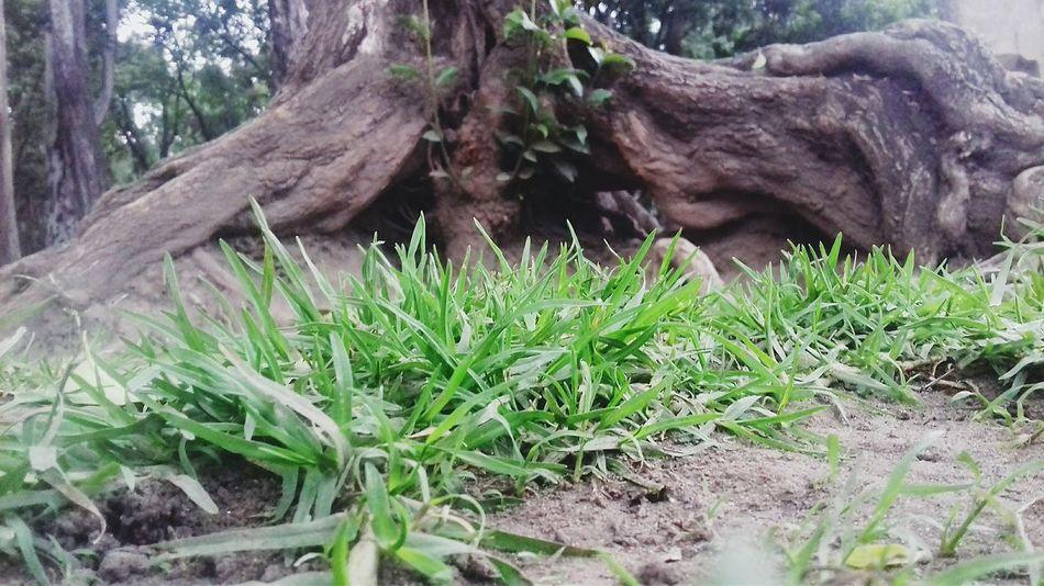 Green Color Raiz Arbol. Naturaleza Hermoso