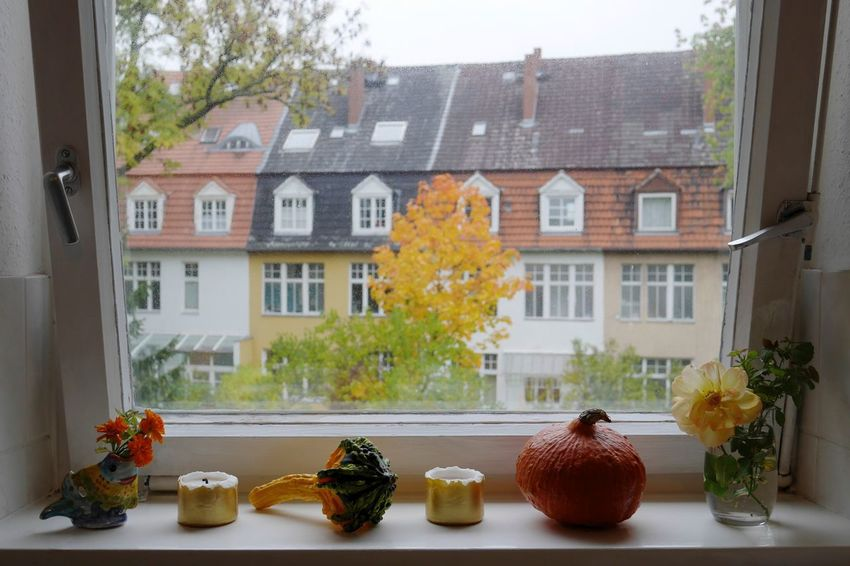Still life Window Wintertime Colors Fall Beauty Taking Photos Light