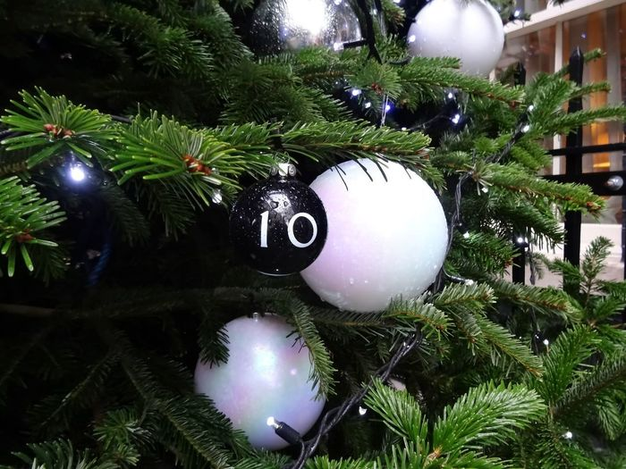 10 Tree
