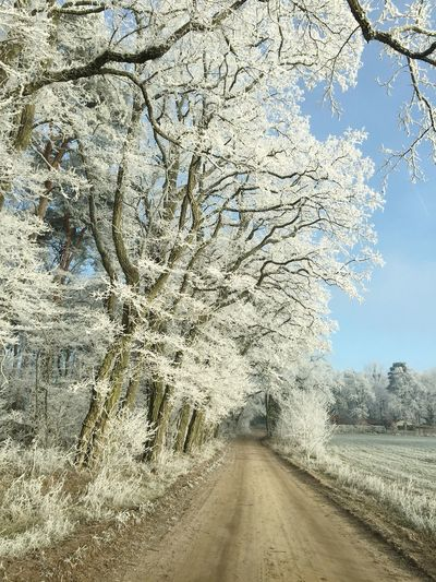✨💫WINTERZAUBER💫✨ Tree The Way Forward Nature Tranquility Branch Day Cold Temperature Snow Growth Outdoors Scenics Road Tree Trunk No People Beauty In Nature Winter Landscape Sky Winter Wonderland Focus On Foreground Winterzauber Lovely My World ♥ Naturelovers Beauty In Nature