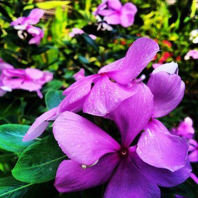 Flower Viceroy Viceroymaldives MyPhotography Ehmedbreez Maldives macro