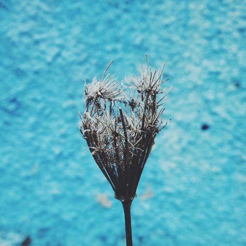 Vscocam соцветие зимняяфлора декабрь Северный