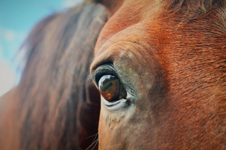The Softness Of A Horse's Eye Is Enough To Warm The Coldest Of Hearts Horses