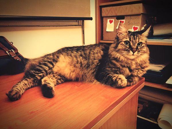 My Cat Hello World Happy