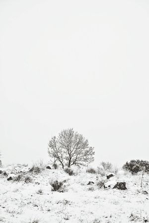 Winter landscape. Monochrome Black And White Españoles Y Sus Fotos From My Point Of View Loneliness Melancholic Landscapes Winter Trees Snow Day