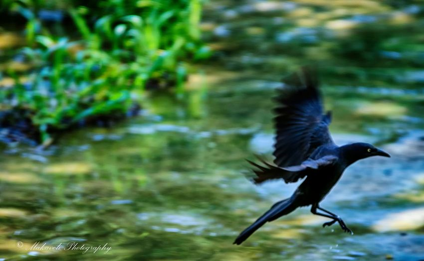 Bird Photography EyeEm Birds Birds In Flight Birdwatching Photography Animal Photography South EyeEm Best Shots - Nature Bird_watchers_daily Birds Of EyeEm
