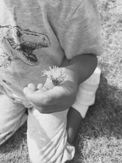 Shades Of Grey Flower T-Rexx Hiya Autistic Amazing Sweet Bear Train Track