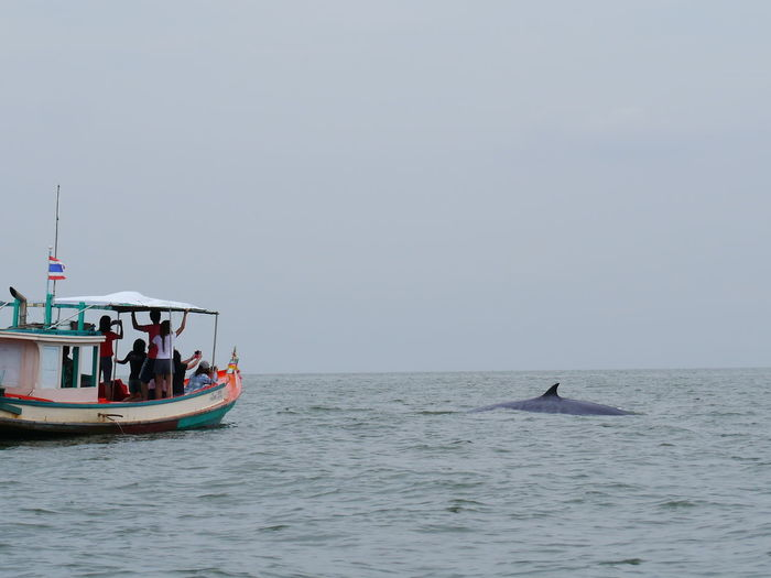 People Sailing On Boat By Whale In Sea Against Clear Sky