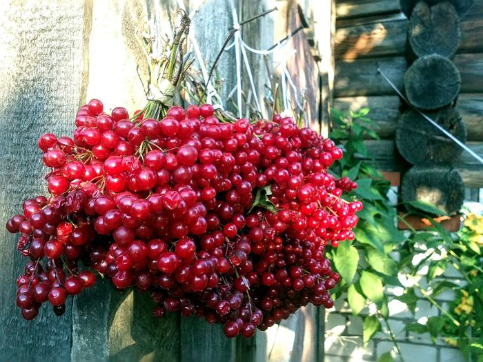 Russian Autumn Viburnum Red Autumn Colors From Russia With Love Россия Осень 🍁🍂 калина красная