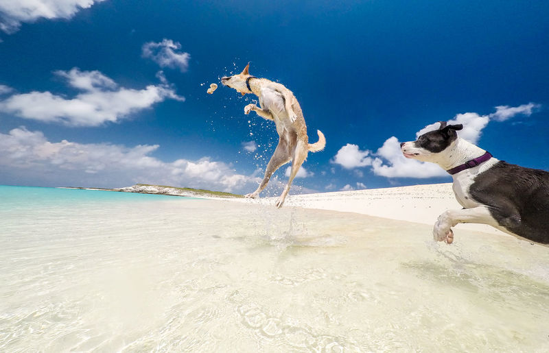 🐶Happy pups at the beach playing in the waves🐕~ Beach Sea Sand Blue Sky Outdoors Vacations Water Wave Sun Day Domestic Animals Puppy Dog Pets Animal Adventure Beauty In Nature Travel Destinations Turksandcaicos Grandturk Paradise Animal Themes Nature Gopro