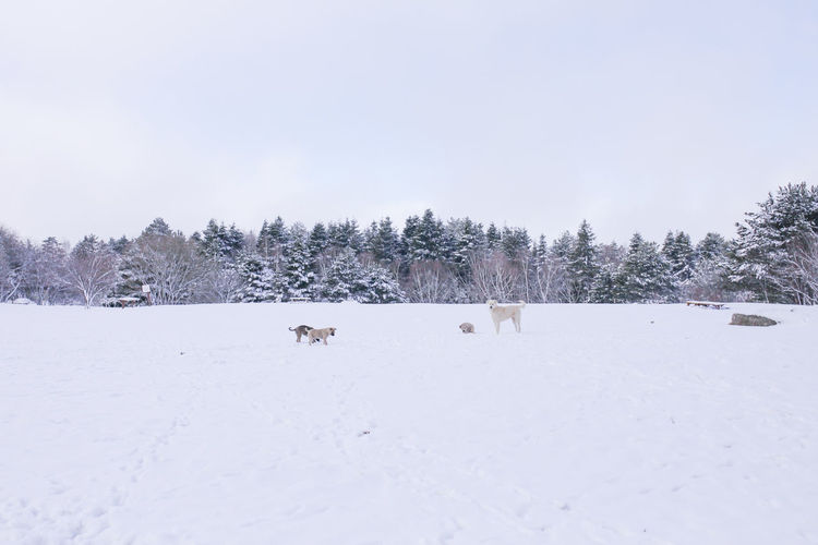 Dogs playing Snow Winter Cold Temperature Mammal Animal Themes Animal Tree One Animal Vertebrate Nature Domestic Animals Sky Pets Domestic Plant Day Beauty In Nature White Color Environment No People Snowcapped Mountain Dogs Puppy White Snow Animal