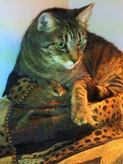 Catlove Myfriend Purrfect MyCompanion