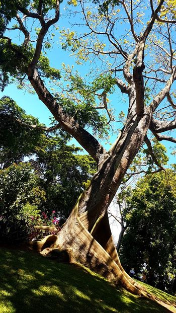 Guadeloupe Gwadeloupe Gwada  Tree Nature Outdoors Growth Beauty In Nature Tree Trunk Branch Plant Forest