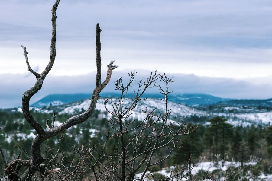 Tree Nature Sky Outdoors Pine Woodland Plant Scenics Cloud - Sky Landscape No People Beauty In Nature Winter Mountain Cold Temperature Day Tree Trunk Snow Winter Close-up Tranquility Green Color Blue EyeEmNewHere