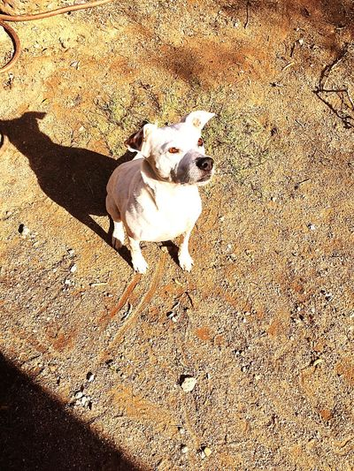 Shellee Dog High Angle View Shadow Outdoors
