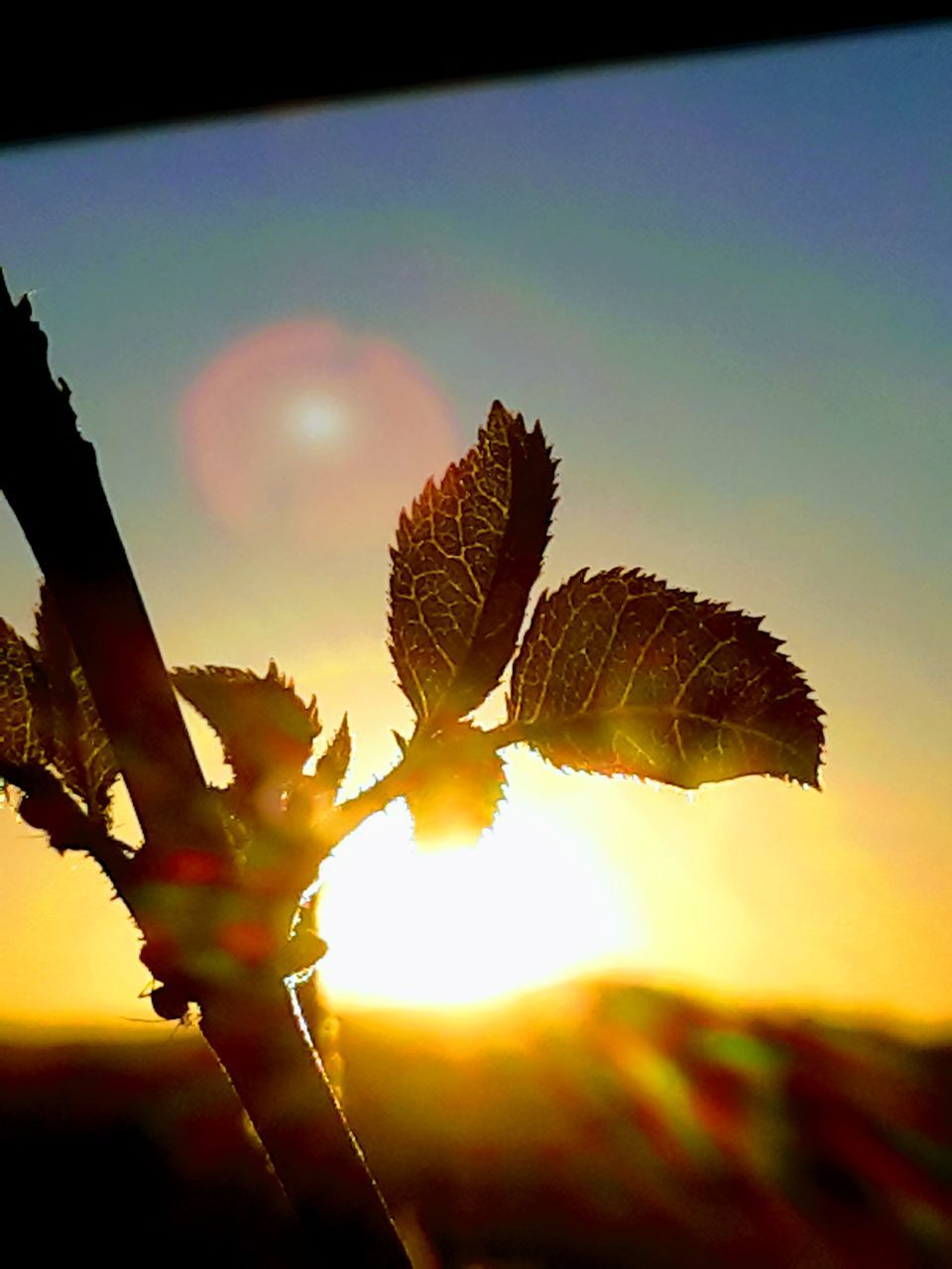 leaf, sunset, nature, sun, growth, outdoors, sunlight, beauty in nature, sky, plant, close-up, day, no people, tree