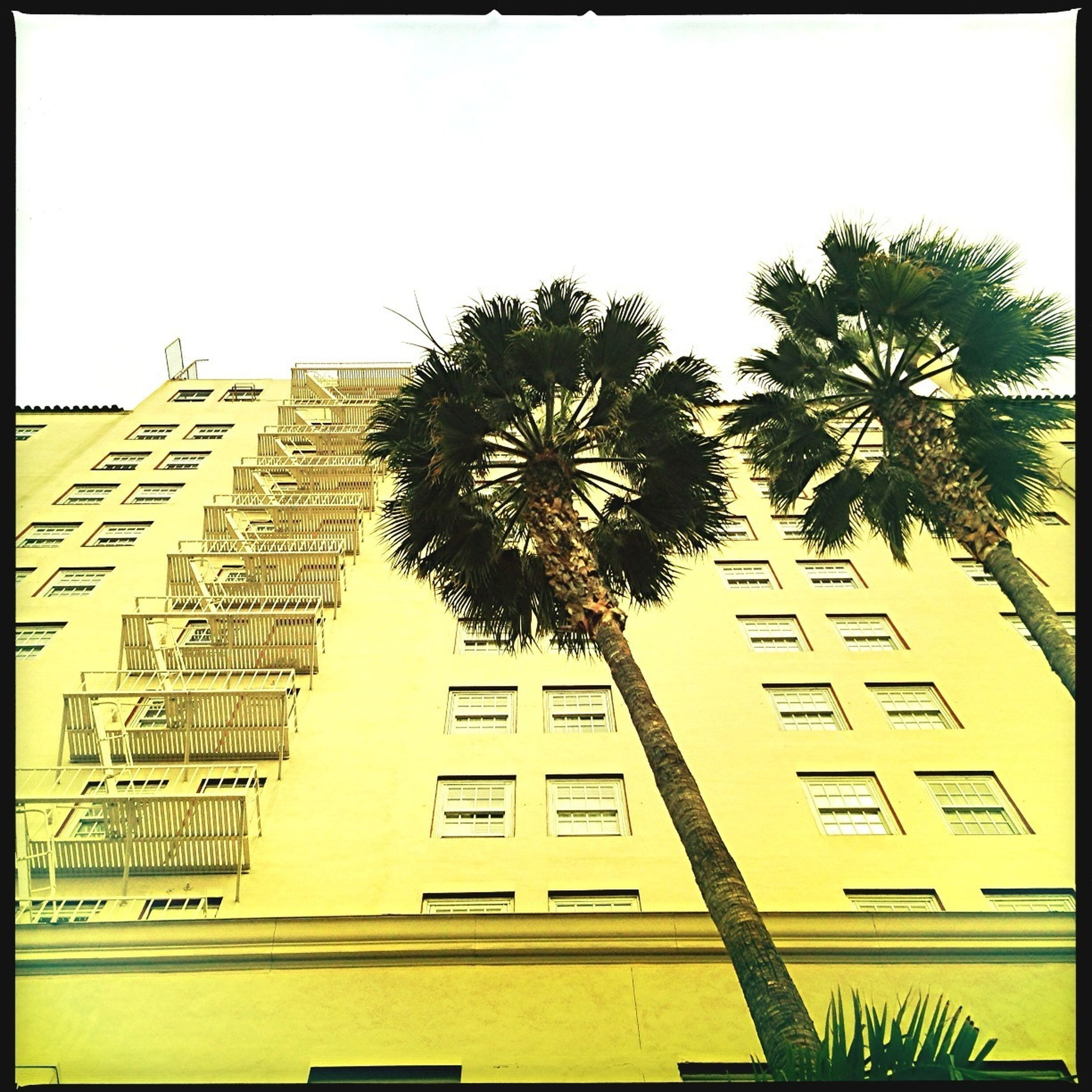 architecture, building exterior, low angle view, built structure, transfer print, palm tree, clear sky, auto post production filter, tree, tall - high, building, growth, city, sky, day, modern, outdoors, no people, residential building, tall
