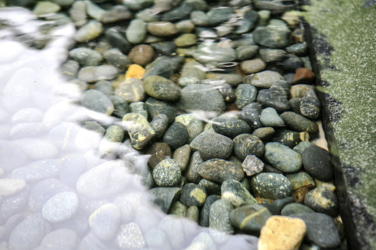 Abundance Animal Themes Beach Beauty In Nature Bundang Close-up Day High Angle View Large Group Of Objects Nature No People Outdoors Pebble Pebbles Reflection Rock - Object Seashell Selective Focus Shell Stone Stone - Object Water Wildlife Yuldong Park