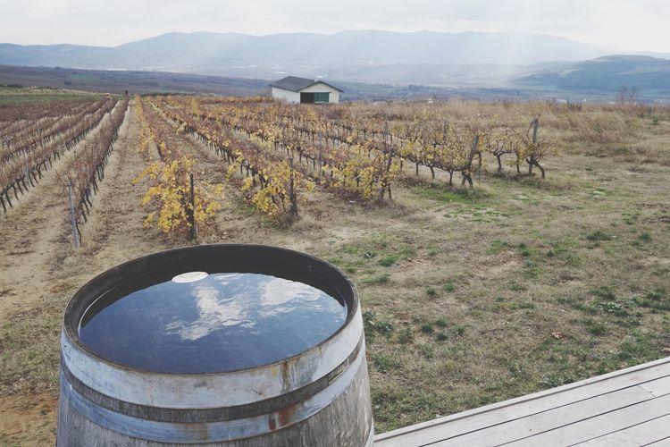 Every soil does not bear the same fruit... Vineyard Grapes Soil Wine Thrace Trakya First Eyeem Photo