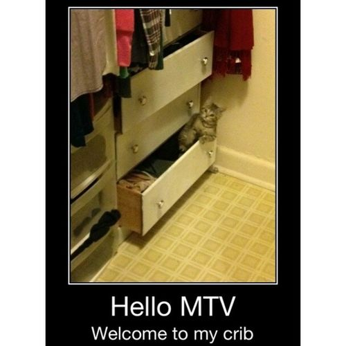 I really think Bella does this all the time Cats Cribs Mtv