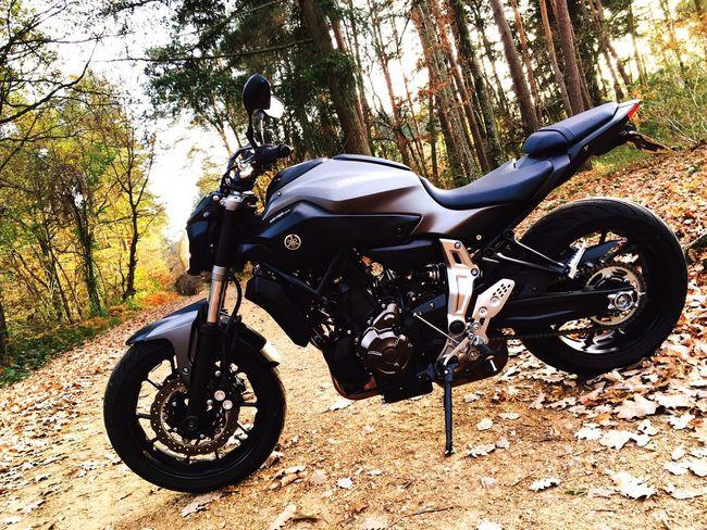 La moto de ma chérie Yamaha Yamahamt7 Mt07 Automne Lezoux France EyeEm Gallery First Eyeem Photo Feuilles D'automne Foret Motorcycles Motorbike Motorcycle Bike Japan Japanese Motorcyle Japenese Gaz Myauvergne