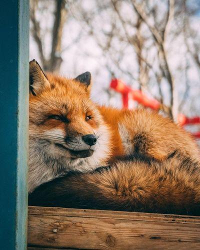 Relaxing Cute