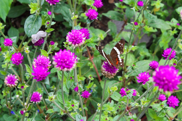 Nature Beauty Beauty In Nature Butterfly Flowers Selective Focus