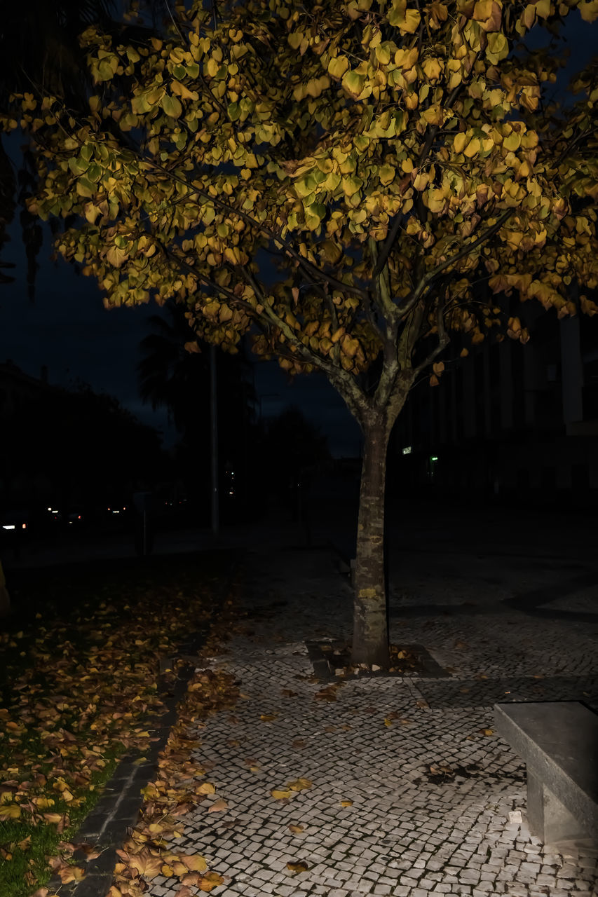 tree, night, autumn, leaf, outdoors, nature, change, beauty in nature, no people, growth, branch, illuminated, sky