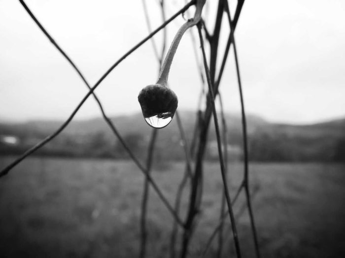 Black & White Waterdrop Black And White Macro Nature