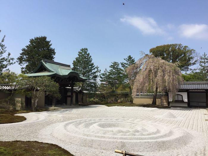 Temple Kyoto Kyoto,japan Kyoto, Japan Japanese Temple Japanese Garden Japanese Gardens 高台寺