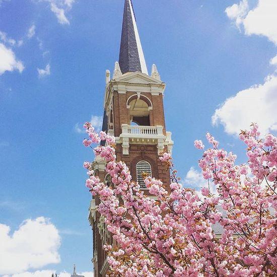 It's spring and I'm in love. SpringFever Spring Treesareblooming Gonzaga Spokane Washington