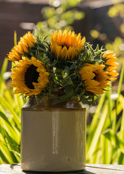 Beauty In Nature Bouquet Bunch Of Flowers Close-up Day Earthenware Pot Flower Flower Arrangement Flower Head Flower Pot Flowering Plant Focus On Foreground Fragility Freshness Growth Inflorescence Nature No People Outdoors Petal Plant Sunflower Vase Vulnerability  Yellow