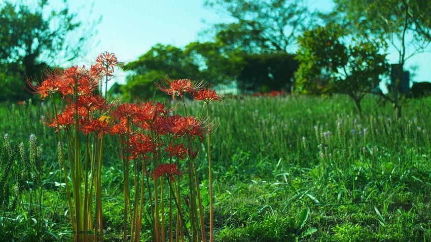 終わりな雰囲気 Flowers Colors CanonFD  Streamzoofamily #oldlens