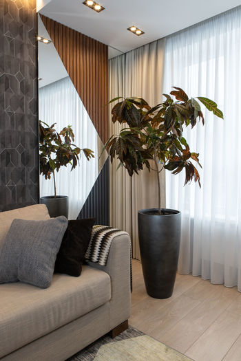 Potted plant on sofa at home