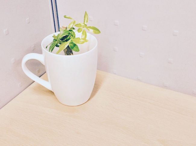 Indoors  Potted Plant No People Freshness Plant Table Indoorplant Minitree Tree In A Cup