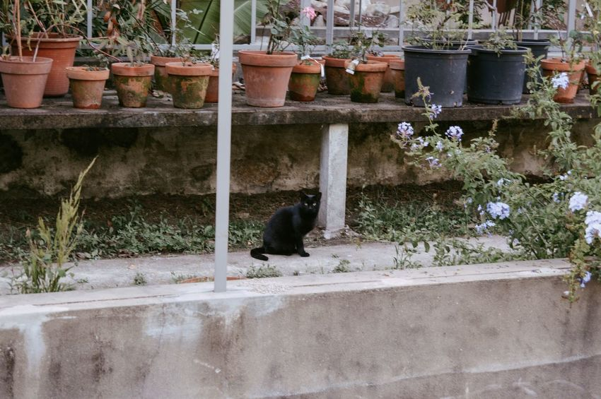Black Cat EyeEm Best Shots EyeEm Nature Lover The Week On EyeEm Animal Themes Architecture Building Exterior Day Eye4photography  Mammal Nature No People One Animal Outdoors Pet