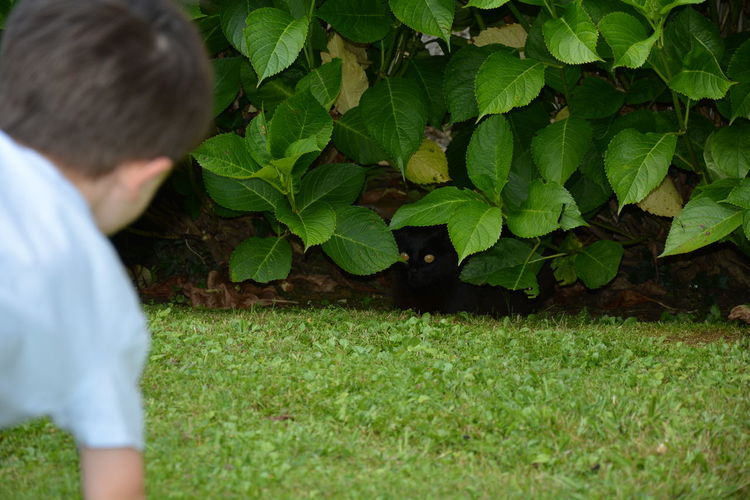 Rear view of boy looking at cat hiding behind plants in back yard