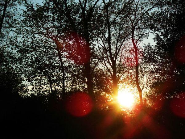 Sun_collection FireNDaSky EyeEm Best Shots - Sunsets + Sunrise