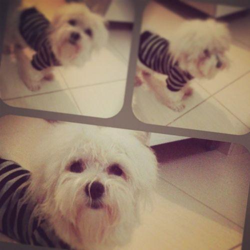 Nininho <3 Dog Petdafamilia