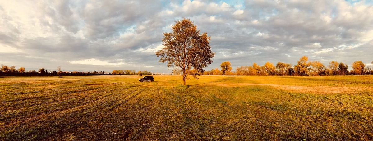 EyeEm Selects Tree Field Nature Cloud - Sky Landscape Beauty In Nature Tranquility Scenics Rural Scene Outdoors No People Grass