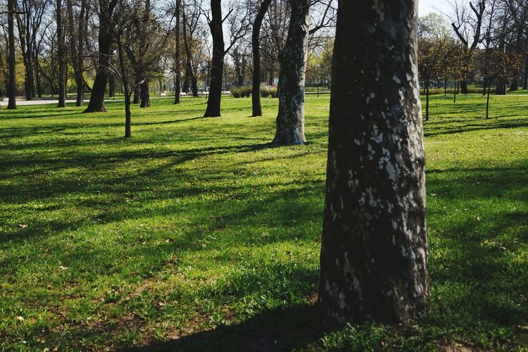 EyeEm Nature Lover Tranquility Scenics ParkLife2017 Nature Springtime Beauty In Nature Sunlight Tree Trunk Growth Long Shadow - Shadow Outdoors No People Fragility Tree Agriculture Field Backgrounds Springtime💛 Blossom Time🌺 Full Frame Freshness Tree Trunk, Tree, Fallen Tree Day Grass