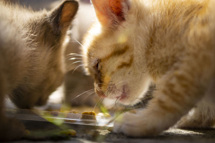 Close-up of cat drinking water