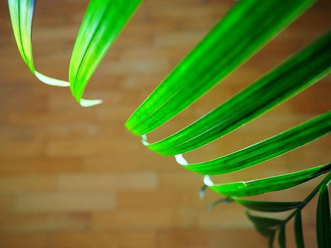 Plants Plant Plants And Flowers Leaf Light Green Floor Curves Smart Simplicity