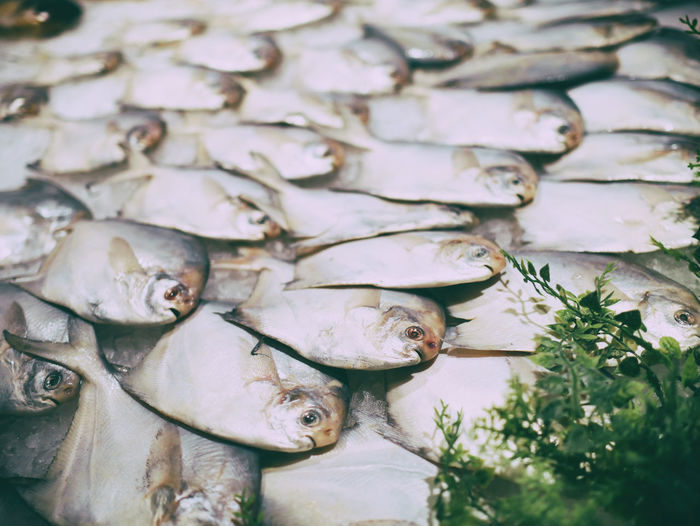 Animal No People Animal Themes Backgrounds Large Group Of Objects Fish Supermarket Food And Drink Foodphotography