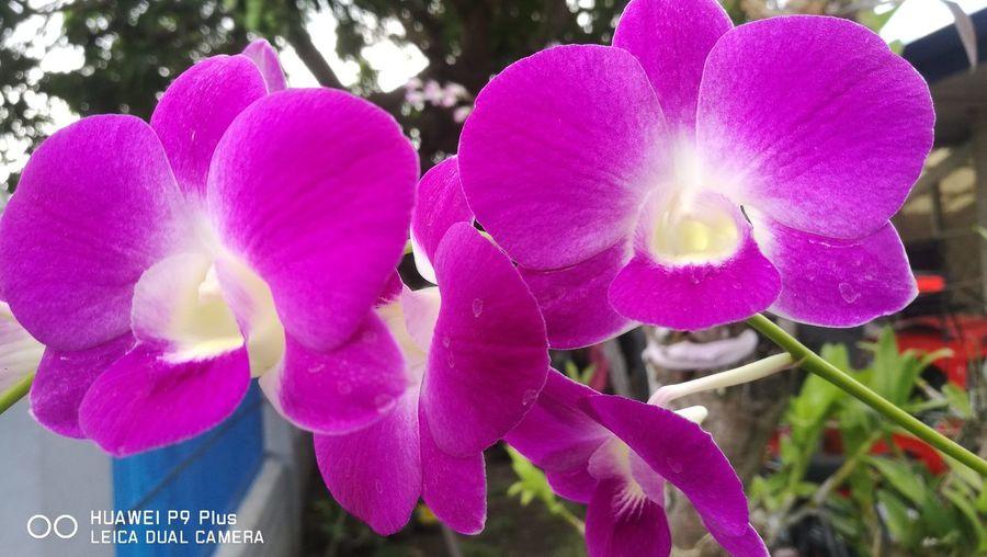 My Flower Love 🌸 First Eyeem Photo