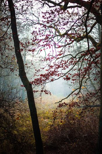 Tree Nature Beauty In Nature Outdoors Freshness Day Bäume Herbstlicht Blätter Leaf Laub Landscape Forest Wald Autumn The Great Outdoors - 2018 EyeEm Awards Capture Tomorrow