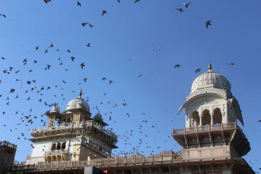 Albert Hall Albert Hall Museum Animal Themes Animals In The Wild Architecture Bird Building Exterior Built Structure Clear Sky Day Dome Flock Of Birds Flying History Large Group Of Animals Low Angle View Nature No People Outdoors Sky Travel Destinations
