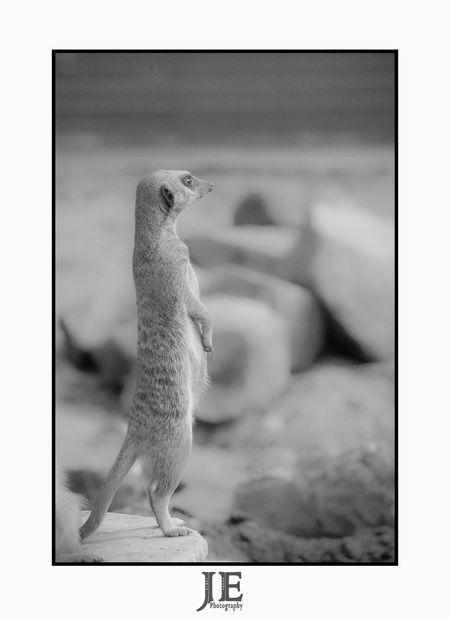 Animal Themes One Animal Indoors  Animals In The Wild No People Full Length Close-up Day Mammal Bird