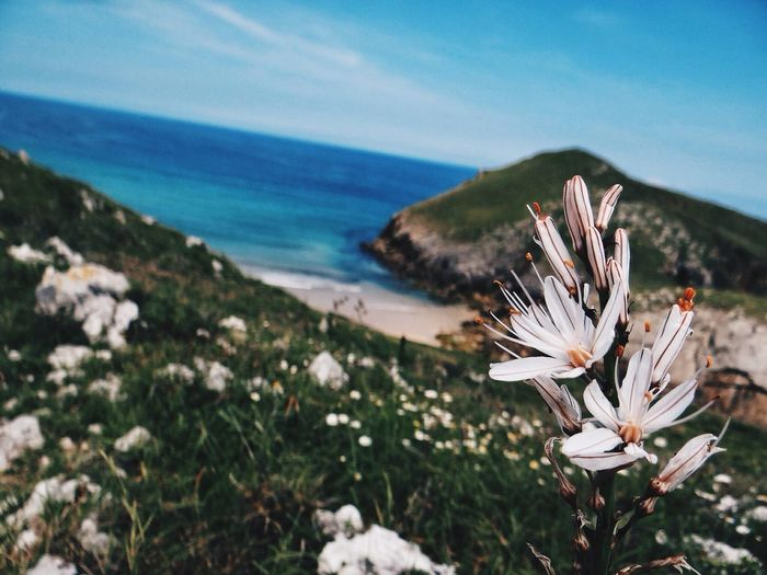 La Belleza de Llanes EyeEm Best Shots EyeEm Flower EyeEm Nature Lover Flower Collection