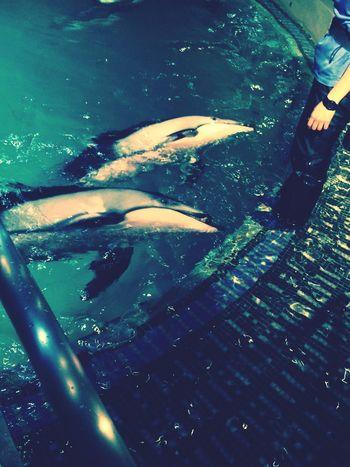 Dolphins Aquarium 城崎